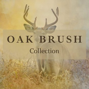 New Oak Brush Collection!