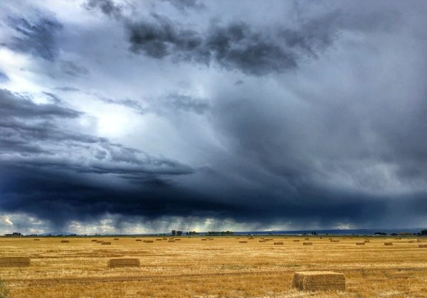 Stormy clouds over golden fields