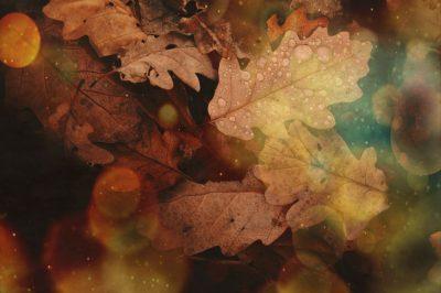 abstract-autumn-autumn-colours-688830120072