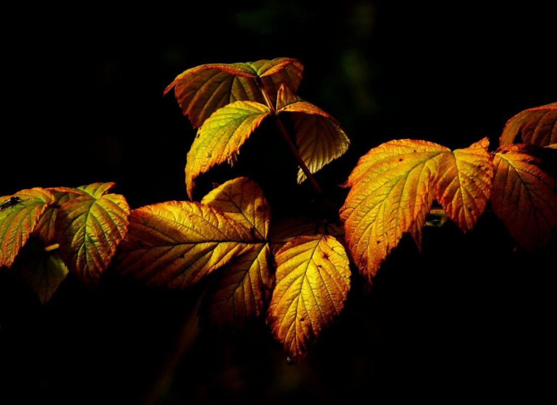 branch-colorful-fall-foliage-4819072