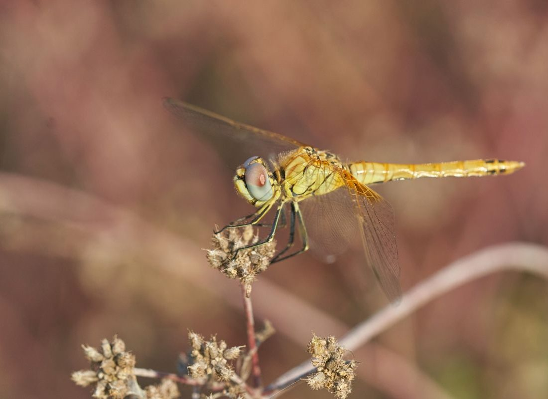 close-up-photo-of-dragonfly